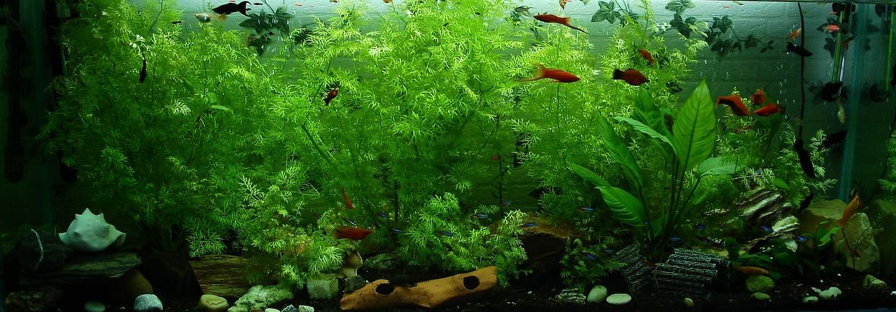 Avoir Un Aquarium les bienfaits méconnus d'avoir un aquarium